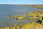 CANADA: CHURCHILL, MANITOBA AND AREA landscapes,  lichins, and lots of things