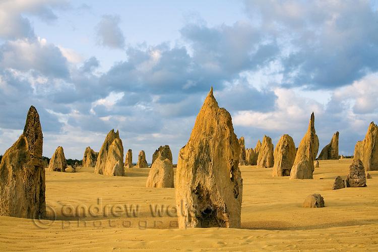 Limestone pillars at dusk in the Pinnacles Desert.  Nambung National Park, Cervantes, Western Australia, AUSTRALIA.