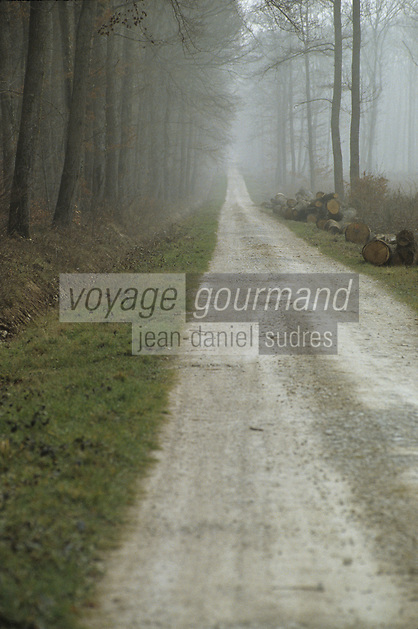 Europe/France/Centre/41/Loir-et-Cher/Forêt de Russy/Environ de Saint-Gervais-la-Forêt : Forêt de chène utilisé par la tonnellerie Seguin Moreau à Cognac et chemin foretsier