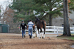 Horses being exercised between barns on opening day of Oaklawn Park Hot Springs, AR. (Justin Manning/Eclipse Sportswire)