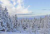 Whispy white clouds float in a blue sky over a snow laden forest.
