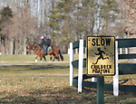 Thoroughbreds make their way to the training track at Overbrook Farm in Colts Neck, New Jersey.