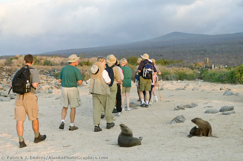 Tourists walk by Galapagos fur seals on the Galapagos Ilsands, Ecuador