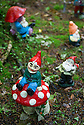 29/05/15<br /> <br /> Toadstool - still the gnomes' favourite place for a sit down.<br /> <br /> For one group of hardy folk, today's rain only adds to the fun that can be had by the beach, fishing in the river, or playing in the woods.<br /> <br /> The gnomes, and a few pixies and fairies, make up a collection, now believed to be close to 2,000 individuals, that 'live' at the Gnome Reserve near Bideford, North Devon.<br /> <br /> Visitors are asked to wear gnome hats, so as not to scare the gnomes who feature as the largest collection in the Guinness Book of World Records. <br /> <br /> Ann Atkin's collection began in 1979 and features traditional gnomes on toad-stools to Olympian athletes, astronauts who work for 'GNASA', a beach scene complete with gnomes in bikinis, a queue for the ice-cream van, Punch and Judy gnomes and another floating on a lilo. Other gnomes can be scene kissing, and flashing their bottoms as the visit the Gents and Ladies toilets. <br /> <br /> <br /> All Rights Reserved - F Stop Press.  www.fstoppress.com. Tel: +44 (0)1335 418629 +44(0)7765 242650