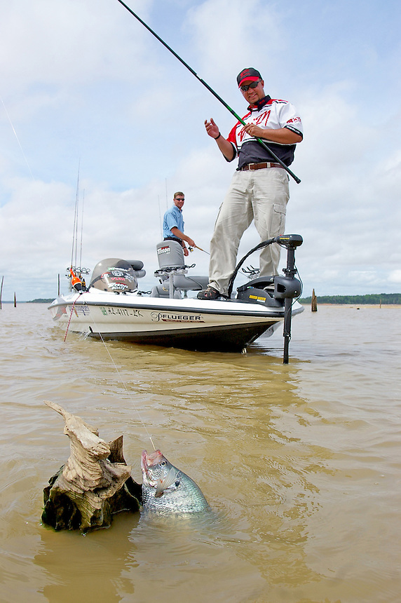 Angler catching Grenada Lake Mississippi crappie by stump