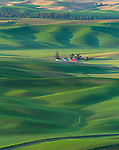 The Palouse, Whitman County, WA: Isolated farm site amid rolling wheat fields
