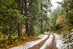 Idaho, North, Coeur d'Alene, Idaho Panhandle National Forest. A road on an autumn morning in the Coeur d'Alene district of the IPNF after a dusting of snow.
