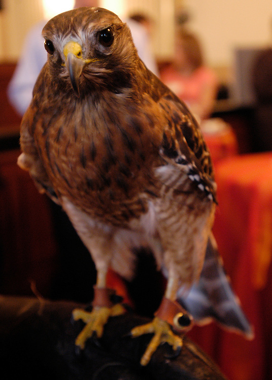 American Zoo and Aquariam Association started its ocean conservation campaign with a reception on Capitol Hill, and showed variety of animals, like this Red Shouldered Hawk. Jack Hanna, the wildlife conservationist and directer emeritus of the Columbus Zoo, was also on hand.