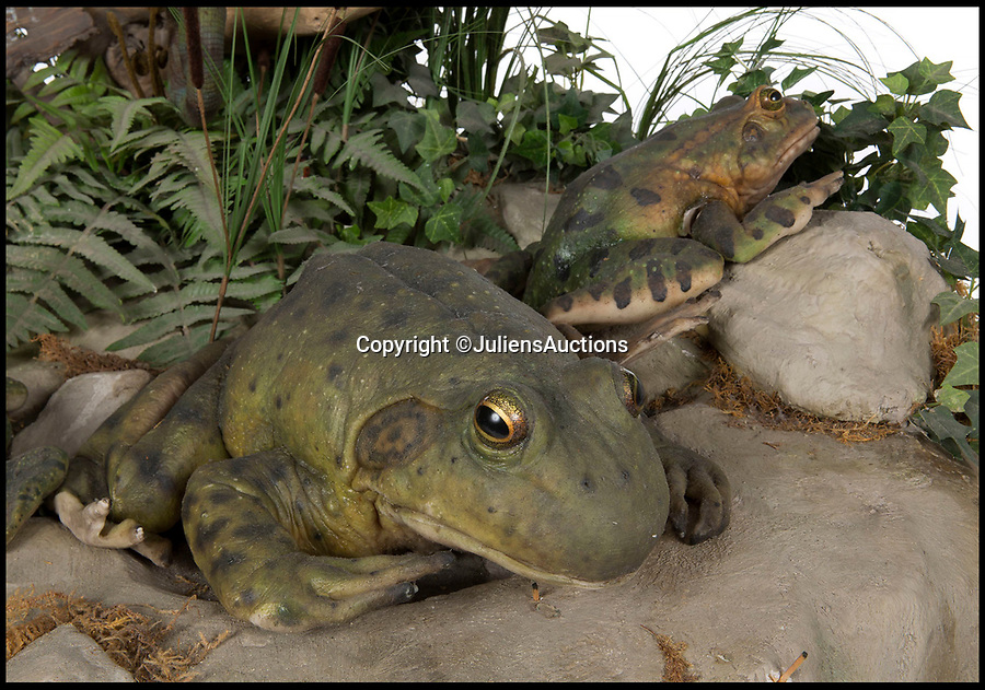BNPS.co.uk (01202 558833)Pic: JuliensAuctions/BNPS<br /> <br /> Your for $6,000 - The actual screen used frogs and chameleons Louie & Frankie from the hugely successful Budweiser advert of the 1990's.<br /> <br /> Forget Old Masters and fine porcelain...modern collectors looking for the final 'statement piece' for their home are now turning their attention to 'screen used' movie momoribillia.<br /> <br /> The unusual collection includes a life sized Arnie from the Terminator, Danny Devito's Penguin from the Batman movie and even a 5ft 7in tall dilophosaurus from Jurassic Park that would make a terrifying conversation piece for any film fan's home.<br /> <br /> The items are expected to fetch at least £21,300 ($30,000) each and are part of the growing trend for collectors spending tens of thousands on Hollywood memorabilia from iconic films instead of art.<br /> <br /> The lots for sale all come from the Osianama Archives - a renowned collection of world cinema amassed by Osian's, India's pioneering arts and cultural institution and auction house which are being sold by Julien's Auctions in Los Angeles on March 8.
