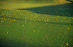 A3AAP0 Golf course driving range with yellow balls over the fairway and greens
