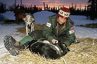 Trine Lyrek boots dogs at sunrise prior to leaving on Wednesday morning at the Nikolai checkpoint.  2005 Iditarod Trail Sled Dog Race.