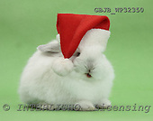 Kim, CHRISTMAS ANIMALS, photos, GBJBWP32350,#XA#