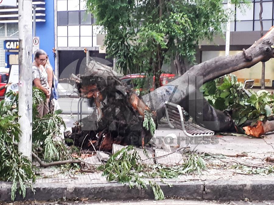 RIO DE JANEIRO, RJ, 07/02/2019 - CLIMA-RJ -  Um temporal com ventos muito fortes atingiu o Rio de Janeiro na noite desta quarta-feira (6). Queda de árvore no colégio Pedro II, Humaitá, proximo a Cobal do Humaitá no Rio de Janeiro (RJ), nesta quinta-feira (07).Humaitá, zona sul do Rio de Janeiro (Foto: Vanessa Ataliba/Brazil Photo Press)