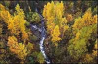 Fall colors line a stream in Denali State Park.