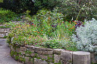 The Garden of Fragrance with medicinal herbs in raised bed with rock wall in San Francisco Botanical Garden