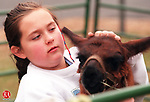 BETHLEHEM, CT 12/06/98--1206DC04.tif  Elizabeth Daoud of Bethlehem pets a lama thats on display at the Bethlehem Christmas Town Festival 05 Dec.-DOUG COLLIER staff photo (Filed in Scans/Scan-In)