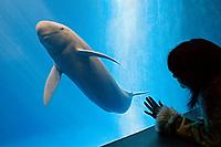 aquarium visitor observing finless porpoise, Neophocaena phocaenoides (c), Indo-Pacific Ocean