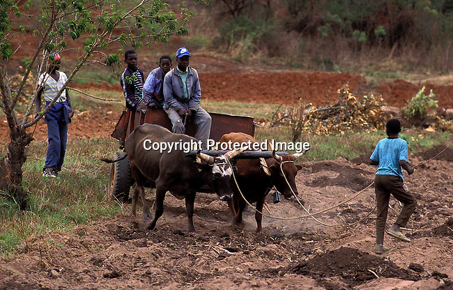 COZIMBA35108.Country. Zimbabwe. Farmers in the fields close to Mutare; rural farming..©Per-Anders Pettersson/iAfrika Photos
