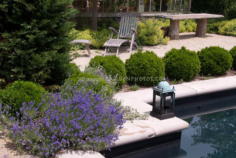 Swimming pool water feature, dry garden, Buxus boxwood, greenhouse, patio furniture, Lavandula angustifolia Hidcote English lavender herb  in bloom