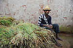 MADAGASCAR Morarano , man with rice plants after harvest in village / MADAGASKAR Dorf Morarano , Farmer mit geerntetem Reis