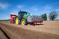 Planting Maris Piper potatoes - Suffolk, March