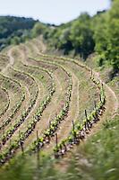Europe/France/Midi-Pyrénées/12/Aveyron/Rouergue/Le Fel:  Les vignes de Laurent Mousset