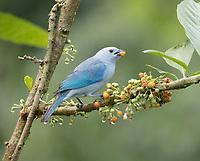 Ecuador, Prov. El Oro, Buenaventura Ecological Reserve,