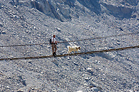 CHE, Schweiz, Kanton Bern, Berner Oberland, bei Innertkirchen: Mann mit Hund ueberquert die Triftbruecke - hoechstgelegene (1870 m) und laengste (102 m) Haengeseilbruecke Europas ueberquert in einer Hoehe von 70 m den tosenden Gletscherbach des Triftwassers, gespeist vom Triftgletscher | CHE, Switzerland, Bern Canton, Bernese Oberland, near Innertkirchen: man with dog crossing Trift Bridge - Europe's highest (1870 m) and longest (102 m) suspension bridge. Trift Glacier and Lake