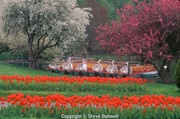 Swan Boats and tulips, Public Garden