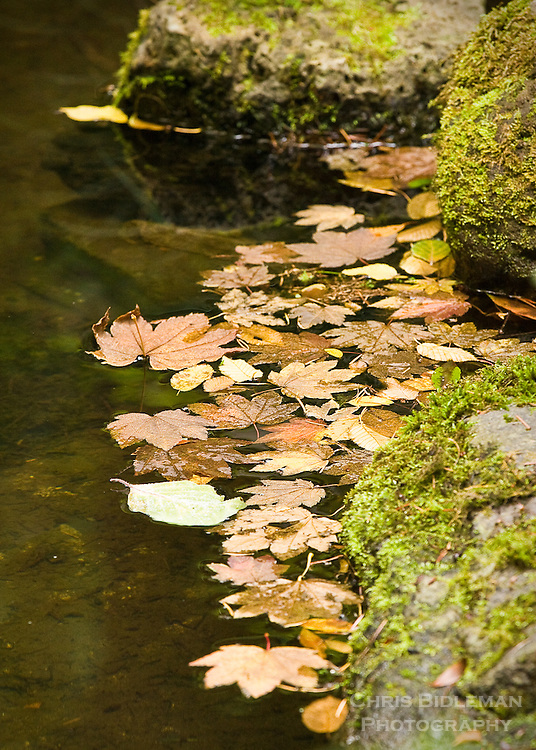 Fall leaves sitting on the water of calm pond in Portland Japanese Garden