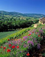 Frankreich, Burgund, Saone & Loire: Landschaft beim Schloss Pierreclos im suedlichen Burgund | France, Burgundy, South-Burgundy, Saone & Loire: Landscape near castle Pierreclos