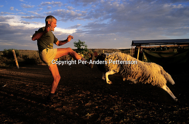 Freddie West, a sheep farmer, play with his favorite sheep (called Hans) on his farm in an all white Afrikaner community on January 12, 2003 in Orania, in the Northern Cape province, South Africa. The village was founded in 1991, and bought by descendants of Hendrik Verwoerd, the architect of Apartheid. It's a private town only accepting whites and about 600 Afrikaners celebrate their culture and keep traditions alive. They have chosen not to be part of the new South Africa. (Photo by: Per-Anders Pettersson)