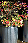 An interesting vignette of several shiny new galvanized trash cans grouped together and used as creative containers to hold a beuatiful array of annuals and perennials featuring the zonal geranium (Pelargonium) 'Indian Dunes'.