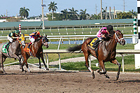 HALLANDALE BEACH, FL - APRIL 01:  #6 Salty (KY) with jockey Joel Rosario on board, wins the Gulfstream Park Oaks (Grade II) at Gulfstream Park on April 01, 2017 in Hallandale Beach, Florida. (Photo by Liz Lamont/Eclipse Sportswire/Getty Images)