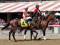 Way Early (no. 4) wins Race 2, Aug. 25, 2018 at the Saratoga Race Course, Saratoga Springs, NY.  Ridden by  David Cohen, and trained by George Weaver, Way Early finished a length in front of Appealing Brief (No. 10).  (Bruce Dudek/Eclipse Sportswire)