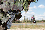 Riders pass by vineyards during Stage 16 of the 2017 La Vuelta, an individual time trial running 40.2km from Circuito de Navarra to Logro&ntilde;o, Spain. 5th September 2017.<br /> Picture: Unipublic/&copy;photogomezsport | Cyclefile<br /> <br /> <br /> All photos usage must carry mandatory copyright credit (&copy; Cyclefile | Unipublic/&copy;photogomezsport)