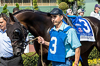 "ARCADIA, CA. JUNE 3: #3 Bal a Bali in the paddock before the Shoemaker Mile (Grade l), Breeders' Cup ""Win and You're In"" race on June 3, 2017, at Santa Anita Park in Arcadia, CA. (Photo by Casey Phillips/Eclipse Sportswire/Getty Images)"