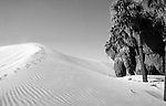 Desert sand dune mirage with palms, Desert mirage with palms, mirage, dunes, sand dunes, desert, palms, mirage in desert, palm trees and sand dunes, Fine Art Photography by Ron Bennett, Fine Art, Fine Art photography, Art Photography, Copyright RonBennettPhotography.com © Fine Art Photography by Ron Bennett, Bennett, Fine Art, Fine Art photography, Art Photography, Copyright RonBennettPhotography.com ©