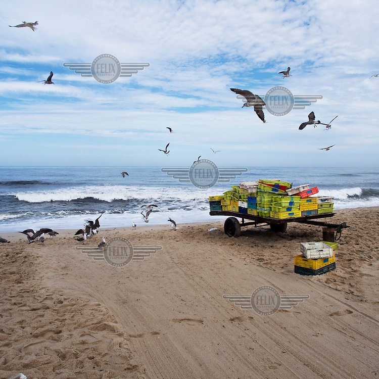 Seagulls surround a trolley carrying empty trays used in the early morning catch on the beach.