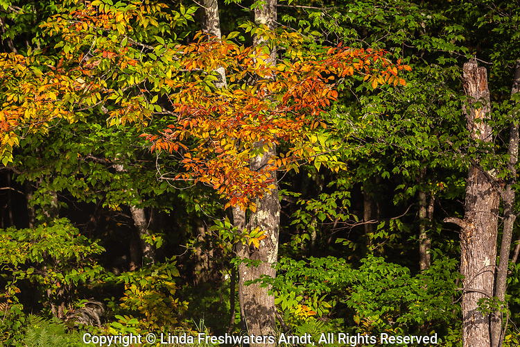 Early fall color in northern Wisconsin.