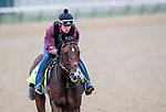 LOUISVILLE, KENTUCKY - APRIL 30: Omaha Beach, trained by Richard Mandella, exercises in preparation for the Kentucky Derby at Churchill Downs in Louisville, Kentucky on April 30, 2019. John Voorhees/Eclipse Sportswire/CSM