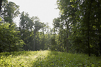 FOREST_LOCATION_90081