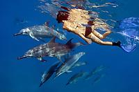 Hawaiian spinner dolphin, Stenella longirostris longirostris, and woman snorkeler, Kona Coast, Big Island, Hawaii, USA, Pacific Ocean, MR