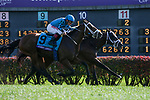 November 3, 2018: Stormy Liberal #9, ridden by Drayden Van Dyke, wins the Breeders' Cup Turf Sprint on Breeders' Cup World Championship Saturday at Churchill Downs on November 3, 2018 in Louisville, Kentucky. Casey Phillips/Eclipse Sportswire/CSM