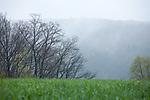 Europa, DEU, Deutschland, Hessen, Landkreis Fulda, Großenlueder, Luetterz, Landschaft, Regen, Dunst, Kategorien und Themen, Natur, Umwelt, Landschaft, Jahreszeiten, Stimmungen, Landschaftsfotografie, Landschaften, Landschaftsphoto, Landschaftsphotographie, Wetter, Wetterelemente, Wetterlage, Wetterkunde, Witterung, Witterungsbedingungen, Wettererscheinungen, Meteorologie, Wettervorhersage<br /> <br /> [Fuer die Nutzung gelten die jeweils gueltigen Allgemeinen Liefer-und Geschaeftsbedingungen. Nutzung nur gegen Verwendungsmeldung und Nachweis. Download der AGB unter http://www.image-box.com oder werden auf Anfrage zugesendet. Freigabe ist vorher erforderlich. Jede Nutzung des Fotos ist honorarpflichtig gemaess derzeit gueltiger MFM Liste - Kontakt, Uwe Schmid-Fotografie, Duisburg, Tel. (+49).2065.677997, ..archiv@image-box.com, www.image-box.com]