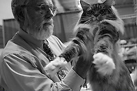 GROTON, CT - SEPT 10: Cats are evaluated by Cat Fanciers' Association Judge, Walter Hutzler, during a cat show on Sunday, September 10, 2006, in Groton, CT. Cats earn points at regional shows like this one, so that they may have a chance to compete in the CFA-IAMS Cat Championship, which will be held at Madison Square Garden on October 14 & 15, 2006 in New York City. (photo by Landon Nordeman)