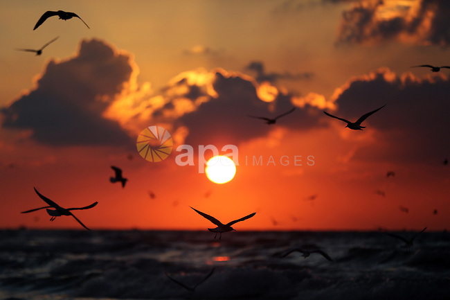 Seagulls fly over the Mediterranean Sea during sunset, at the coast of Gaza beach, on January 04, 2017. Photo by Yasser Qudih