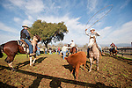 Calf marking and branding, Wooster Ranch, Salt Spring Valley, Calif.