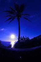 Sunrise and palm at Pololu The Big Island of Hawaii, Pacific Ocean