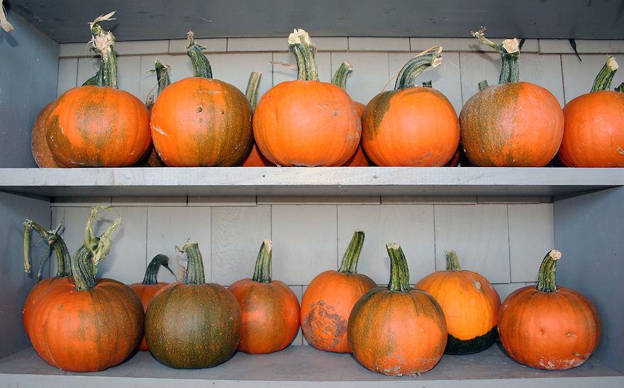 Pumpkins for sale on shelf